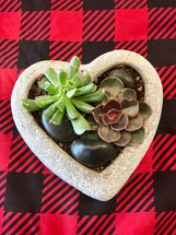 As my love grows! heart shaped container with river rocks and succulents long lasting plant. 6 inch by 6 inch