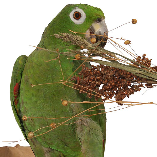 Naturals Pick 'n' Fly - 130g - Treat for Pet Birds