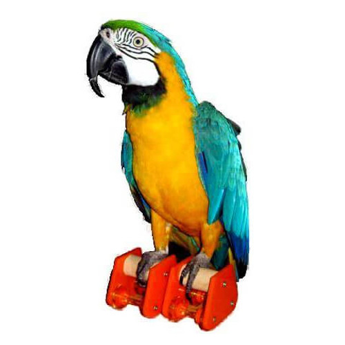 Parrot Roller Skates - Trick Foot Toy (Pair)