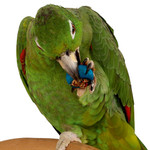 Six Rings-A-Treat - Tasty Parrot Toy Treat