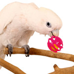 Roll & Ring Foot Toys for Parrots - Pack of 3