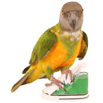 Sneaker Parrot Toy