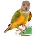 Sneaker Parrot Toy