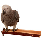 Manzanita Flat Perch - Large