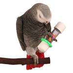 Rattle - Medium Parrot Foot Toy