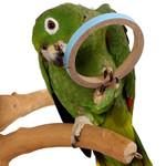 Birdie Bangles - Large - Pack of 6