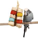 Chiquito Bird Kabob - Small