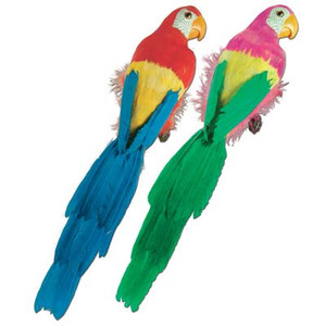 """Feathered Parrots - 20"""""""