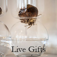 live-gifts.jpg