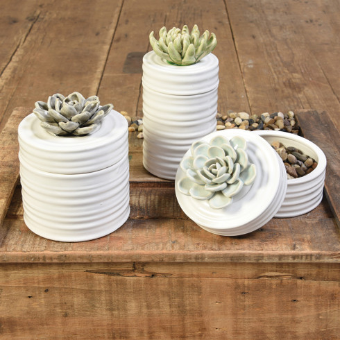 succulent canister