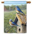 Summer Bluebirds