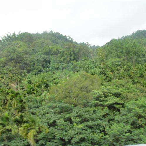 high-mountain-dark-roasted-dong-ding-oolong-9-.jpg
