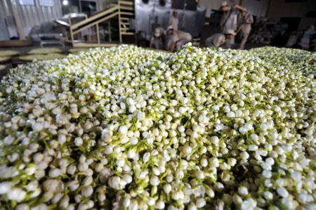 jasmine-tea-process-1.jpg