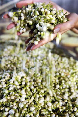 jasmine-tea-processing-4.jpg