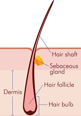 The Science of Hair