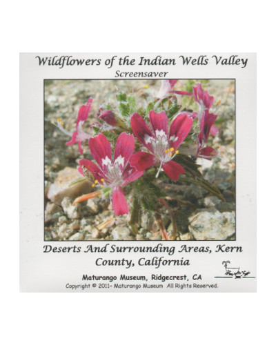 Screensaver - Wildflowers of the Indian Wells Valley
