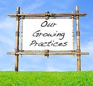 growingprac.jpg
