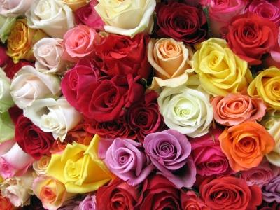 rosesassorted.jpg