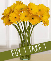Dandy Daisies: Buy 12 Get 18