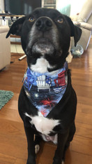 Friends Pet Couture 'Collar Bandana'