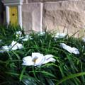 Lil Fairy Grass Mat
