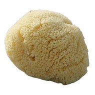 Organically Grown Natural Sea Sponge (Large) 10cm x 10cm Country of Origin Greece