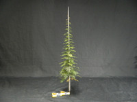 "The Scenic Factory - 6"" Pine Tree Kit"