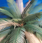 Reality in Scale - Palm Leaves 2