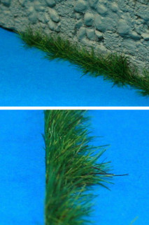 Dry grass is a light tan color!
