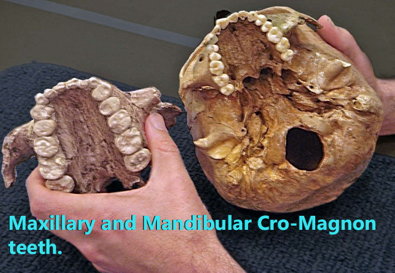 Cro-Magnon teeth