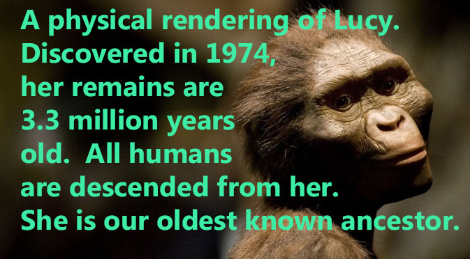 We are all descended from Lucy