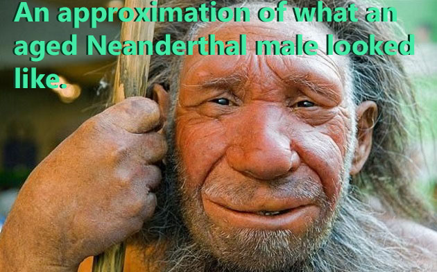 Neanderthal physical features