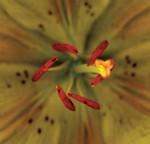 Yellow Flower Center Print