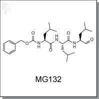 MG132.jpg