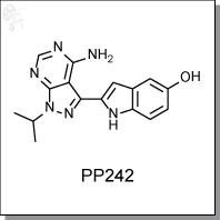 PP242.jpg