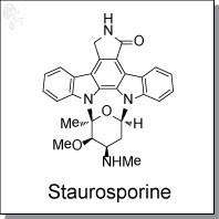 Staurosporine.jpg