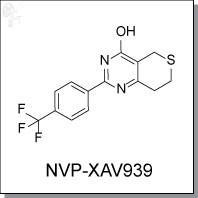 NVP-XAV939.jpg