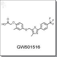 GW501516.jpg