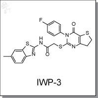 IWP-3.jpg