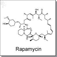 Rapamycin.jpg