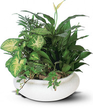 This low bowl filled with living plants will also carry comfort and compassion for many months to come. Perfect to send to the home or service.