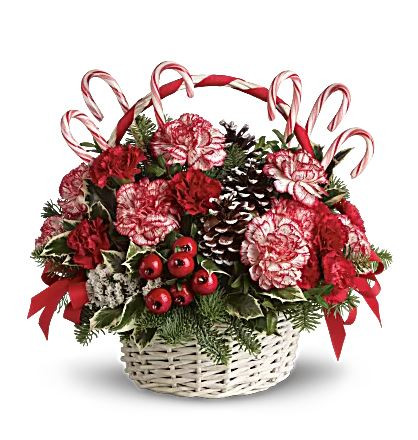 Take a walk through a candy cane forest with this fun, festive basket! This Christmas floral arrangement stars unique peppermint carnations and edible candy canes amongst fragrant fir, pinecones and berries. It's an easy way to send the Christmas spirit to someone far away! A white basket with candy cane style handle is filled with peppermint and red carnations, variegated holly, noble fir and white statice, then decorated with frosted pinecones, edible candy canes, berries and red ribbon.