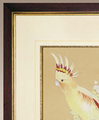 White Cackatoo, Frame Authentic Models