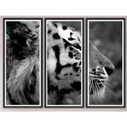 "Trowbridge ""Tiger"" Photo Triptych by Jamie Thorn - Set of 3"
