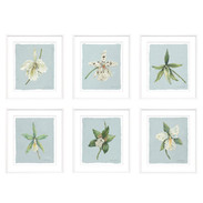 "Trowbridge ""Orchids"" Prints by Meridith Martens - Set of 6"