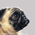 Pug Study III Limited edition print by Justine Osborne