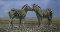 Namibian Whispers - A Zebra Study by Paul Apps