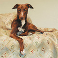 Study of a Comfortable Long Dog in Oil by Claire Eastgate