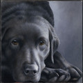 Black Lab - Dog Tired by Nigel Hemming
