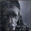 Black Lab - Dog Tired by Nigel Hemming